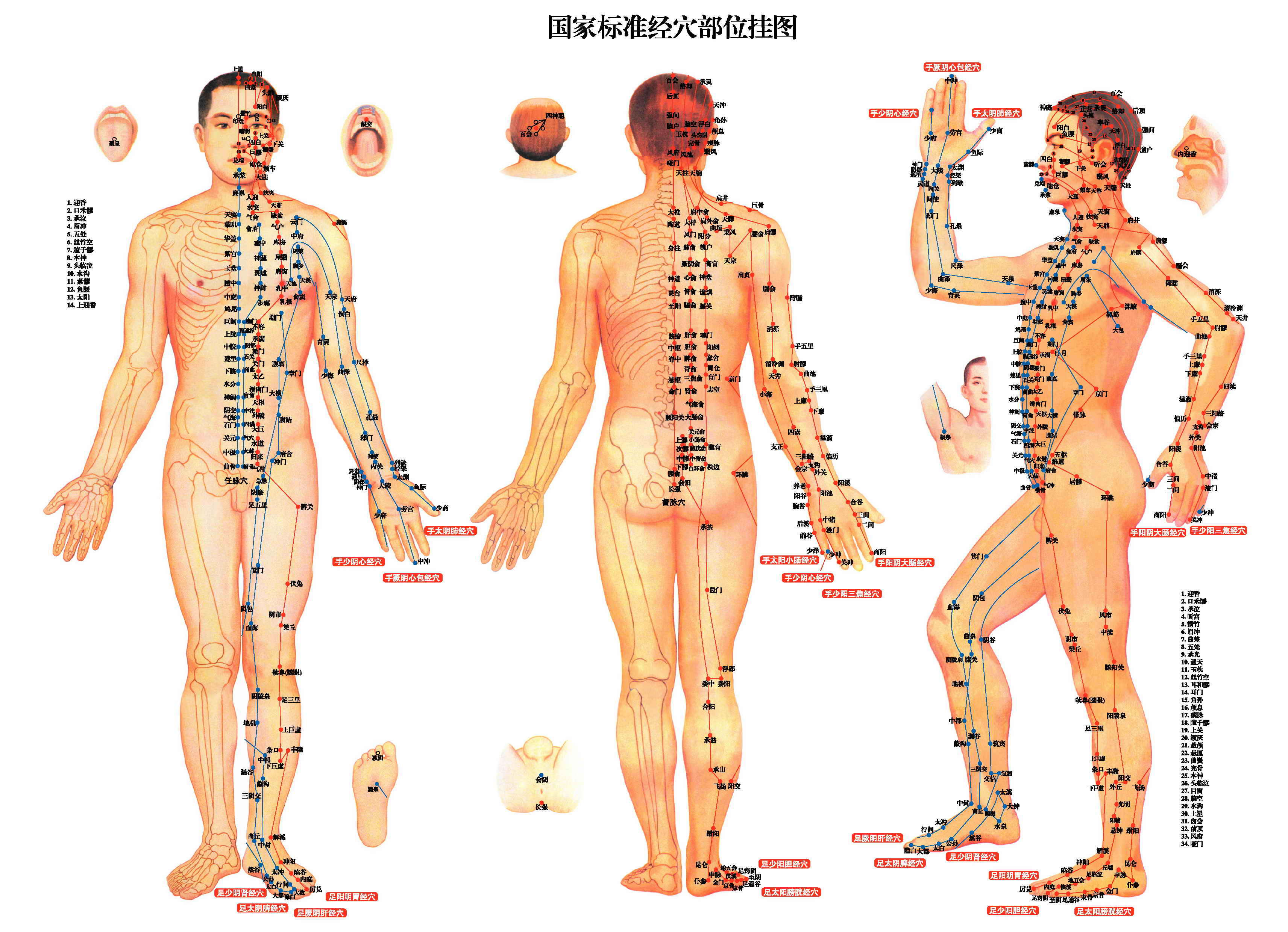 the benefits of acupuncture on the human body The body the bedroom how much do you know about sex, love, and the human body the definition of acupuncture, the benefits of acupuncture and its drawbacks.
